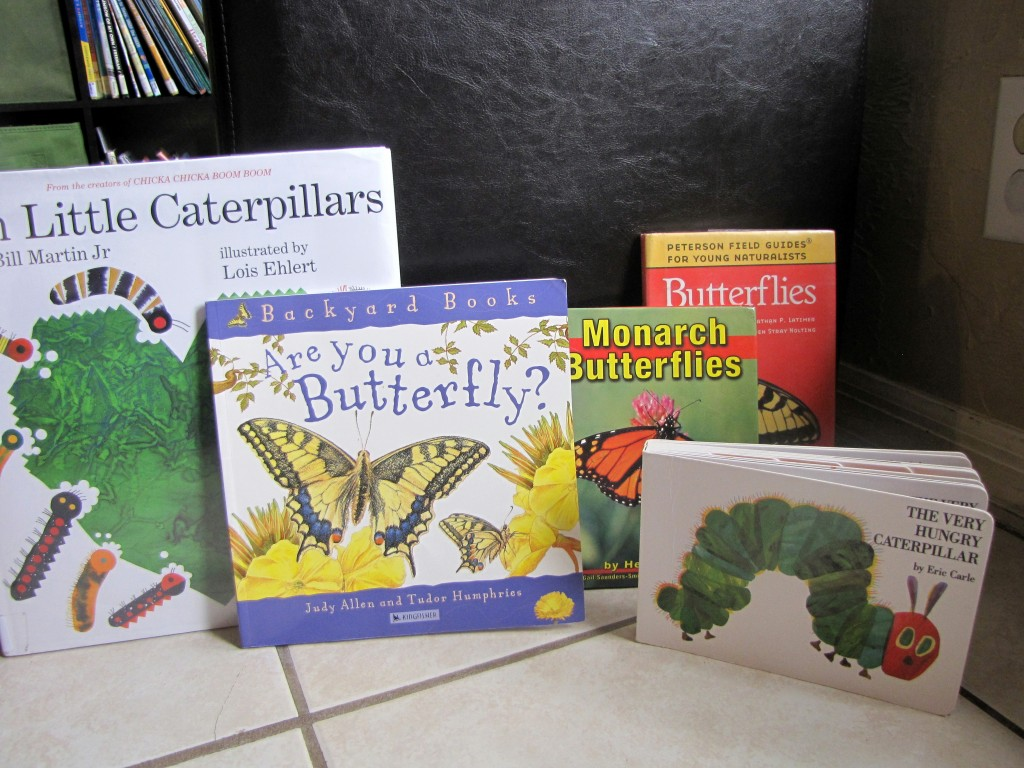 Butterfly life cycle lesson plan for preschoolers